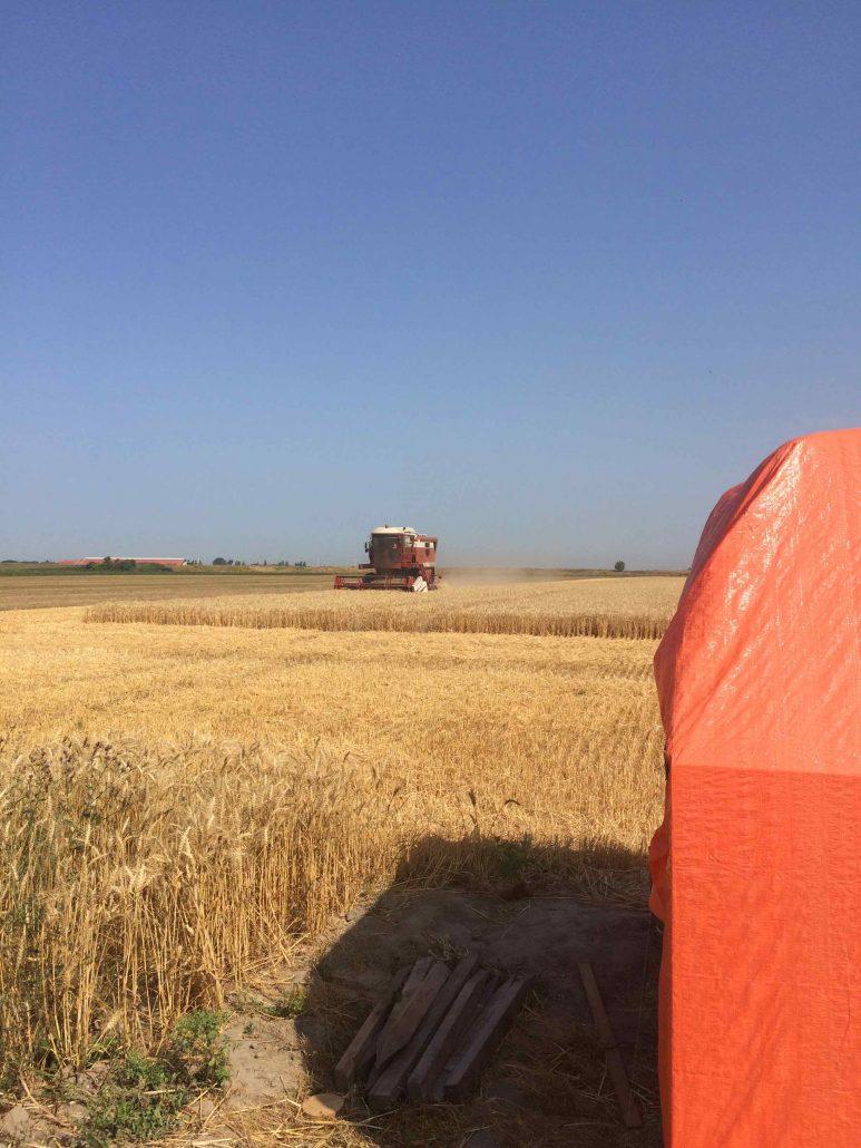 Strobalen en tarwe oogst